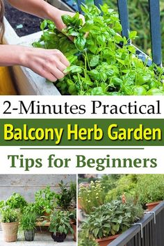 If you're new to growing plants, these 2-Minutes Practical Tips for Starting a Balcony Herb Garden are going to help you a lot. Growing Herbs In Pots, Growing Tomatoes, Growing Plants, Balcony Herb Gardens, Cooking Herbs, Garden Seeds, Edible Garden, Gardening Tips, Vegetable Gardening
