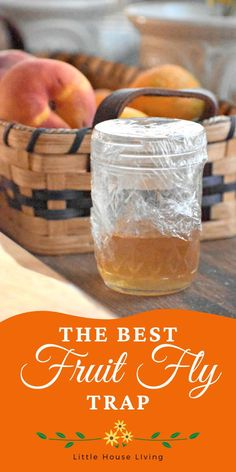 Pesky fruit flies bothering your produce in your kitchen? Sometimes it's impossible to put all of your fresh fruit and veggies in the fridge so it has to sit out! Here's a simple fruit fly killer to keep them from coming back. Fruit Fly Killer, Best Fruit Fly Trap, House Cleaning Tips, Green Cleaning, Cleaning Hacks, Natural Cleaning Recipes, Organic Cleaning Products, Budget Home Decorating, Cake Decorating