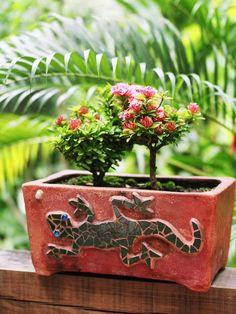 Blumentopf Keramik Töpfe kleine Blumen Pflanzen