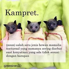comma wiki #kampret Quotes Lucu, Jokes Quotes, Funny Quotes, Funny Memes, Hilarious, Modern Words, Mean Humor, Silly Me, Quotes Indonesia