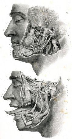 Anatomie-Bestandteile des Menschen