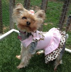 Laci is super cute in her baby pink & leopard custom made dress from Fetch…