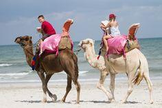 Tunisie - Balades en chameaux sur la plage