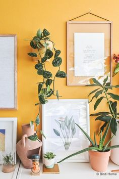 Wildernis plantenpot collectie 'Nelis' okergeel wandpot Urban Jungle Bloggers Diy Kitchen, Kitchen Ideas, Where The Heart Is, Diy Videos, House Plants, Gallery Wall, Amsterdam, Interior Design, House Styles