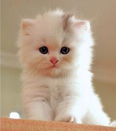 Lulu Belle from Good Morning Kitten. What a beauty. :)