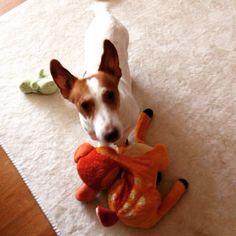 Tom et bambi #dogsitting #lille