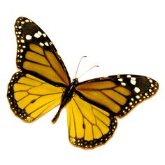 ❤ liked on Polyvore featuring butterflies, animals, backgrounds, yellow and flowers