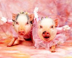 """""""How do we look in our tutu?"""""""