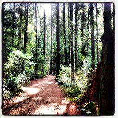 Vancouver's Pacific Spirit Park