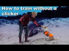 How to train without a clicker- dog training