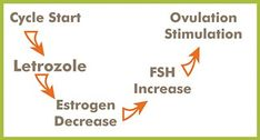 If the body makes less estrogen at the start of the cycle, a woman's FSH level increases and ovulation is stimulated or enhanced. Letrozole is considered as an alternative to Clomid for women undergoing ovulation induction. Letrozole appears less likely to affect the uterine lining, perhaps because of a short half-life.