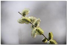 Spring time by Watze D. de Haan