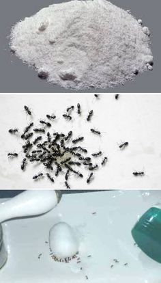 Homemade Ant Killer