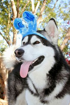 Follow Tonka on YouTube and Facebook at The Adventures of Tonka the Malamute ♡!