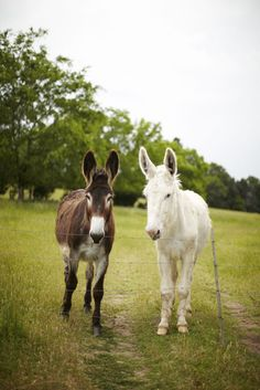 Hamson, remember when everyone had a dog named after them and I got the donkey? Zebras, Beautiful Horses, Animals Beautiful, Farm Animals, Cute Animals, Cute Donkey, Miniature Donkey, Beautiful Creatures, Animal Kingdom