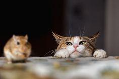 引用画像  I think we all pretty much know what that cat is thinking!  LOL