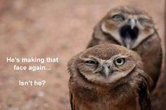 hahaha! owls