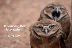 @Amy Niesen Bahahahaa They look like they should be OWLING!!