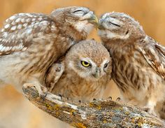 two's company..threes a crowd....