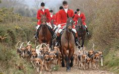 Hunting Act in 'tatters' as thousands prepare for Boxing Day meet ...