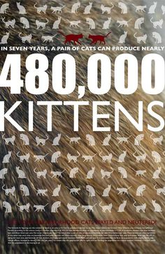 Feral Cat Poster....please spay/neuter !!!!