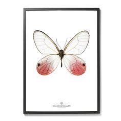 Plakat Motyl | Hagedornhagen | Designzoo