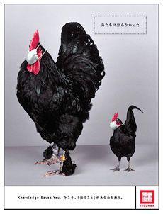 宝島社 企業広告 2004年「鳥たちは知らなかった」