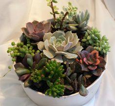 Planta suculenta. Plantas de jardín DIY de por SucculentOasis
