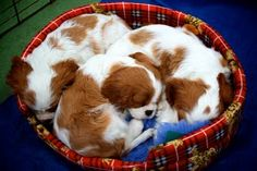a puddle of puppies...