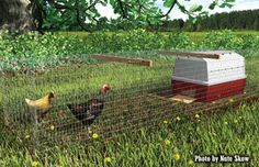 Create The Perfect Chicken Coop For Any Space | Tractor Supply Co.