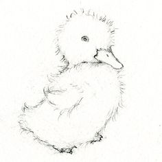Sweet duckling sketch