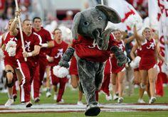 Alabama Crimson Tide Mascot   Big Al Elephant
