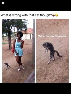 Funny Animal Memes, Funny Cat Videos, Dog Memes, Funny Cats, Funny Animals, Animal Humor, Hilarious Memes, Funny Tweets, Funny Minion