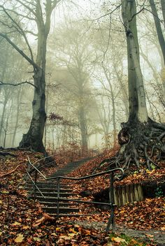 path into ..... | Flickr - Photo Sharing!