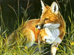 ô¿ô¬ Fox 34