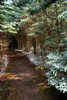 Hiking Trails in New York | ... trees on hiking trail path in the Catskill Mountains, New York State