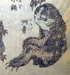 """Kappa are a yōkai found in Japanese folklore, and also a cryptid. Their name comes from a mixture of the word """"kawa"""" (river) and """"wappo,"""" an inflection of """"waraba"""" (child). In Shintō they are considered to be one of many water deities, their yorishiro, or one of their temporary appearances. It has been suggested that the kappa legends are based on the Japanese giant salamander or """"hanzaki"""", an aggressive salamander which grabs its prey with its powerful jaws."""