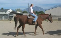 First Time Horse Owner: A Primer. READ NOW, PIN LATER! :D