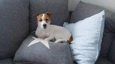 Duffy <3 Duffy, Dogs, Animals, Animales, Animaux, Pet Dogs, Doggies, Animal, Animais