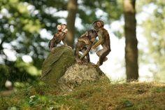 Tres Banditos, pt.8,  3 Monkey Babies, Barbary Macaques