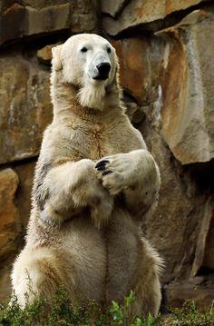 In Memoriam - RIP Knut by ~Katzilla13 on deviantART
