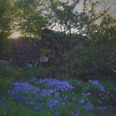 wild, wild blue / michaela harlow