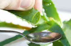 40 Amazing Uses for Aloe Vera! - 40 Amazing Uses for Aloe Vera!What is Aloe?Aloe is a plant originally from Africa. The long, green leaves contain aloe gel and a sticky yellow residue called latex.The gel is the part of the aloe. Natural Treatments, Natural Cures, Natural Healing, Natural Skin, Natural Life, Skin Treatments, Herbal Remedies, Health Remedies, Home Remedies