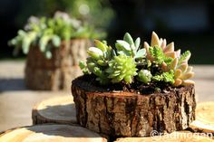 Use a stump and succulents centerpieces