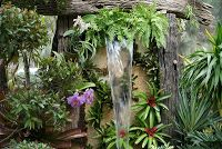 : Bromeliads in the Garden , mounted on the wall under the waterfall.