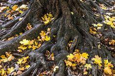 """""""The Root Of It All"""" by Debra Martz www.debramartz.com http://debramartz.com/featured/the-root-of-it-all-debra-martz.html"""