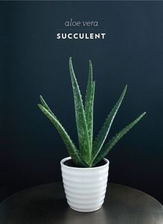 Would love an aloe vera plant in my room, its leaves do wonders for your skin!