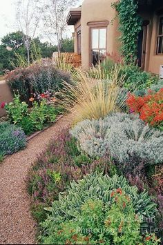 A colorful Xeriscape garden design by Susan Blake of Santa Fe, New Mexico, features many beautiful drought tolerant species, including Zauschneria, Stachys, Centranthus, lavender, Yarrow, Iris, Russian Sage, Gaillardia, and many ornamental grasses including Miscanthus. by Hermoyne