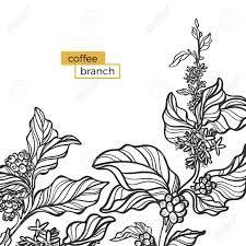 50+ Coffee bean plant clipart ideas in 2021
