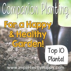Companion Planting Top 10 Plants